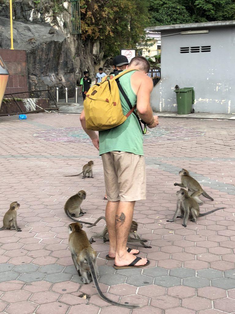 batu caves monkeys