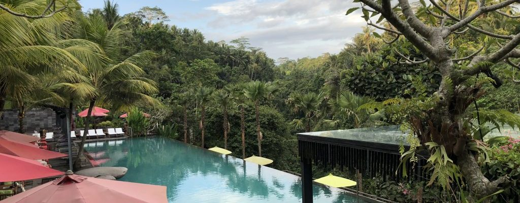 jungle fish bali infinity pool