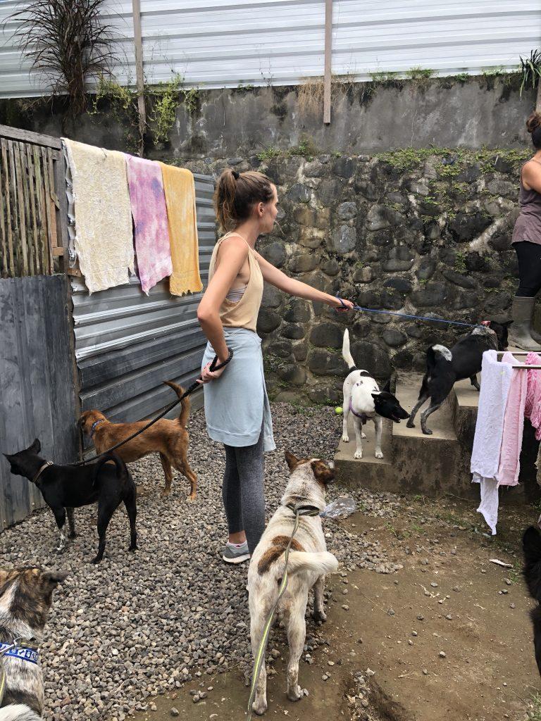 bali dog rescue shelter