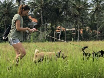 dog rescues bali