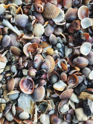 seashell beach thailand