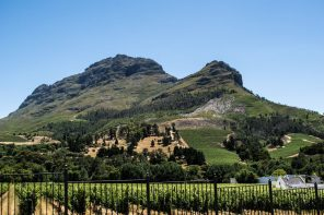 reveler tours south africa wine tours