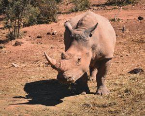 oudtshoorn safari south africa