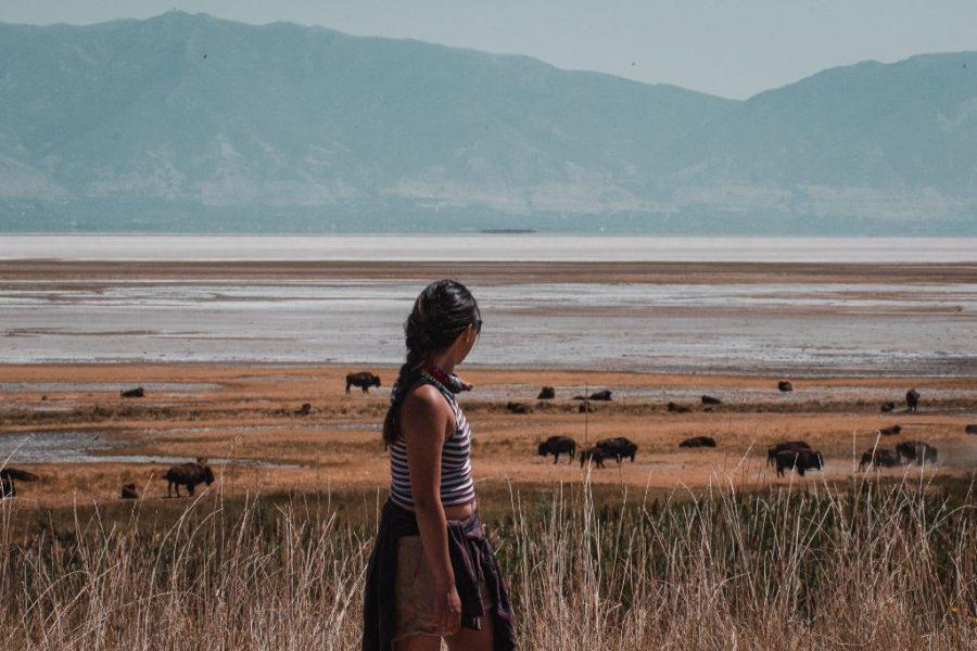 antelope island state park utah bison
