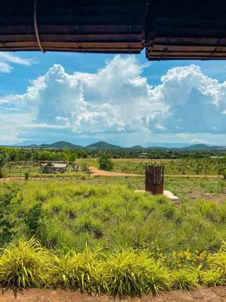 View of La Plantation Pepper Farm from La Plantation Restaurant