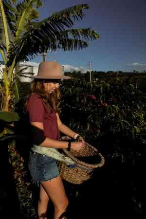 Costa Rica Travel Guide - Alicia Picking Coffee Beans in Starbucks Hacienda Alsacia Coffee Farm - Costa Rica