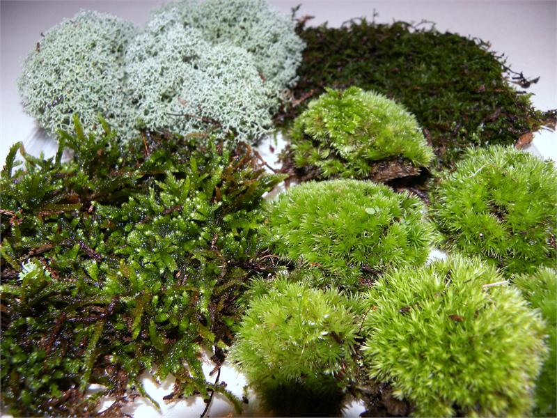How To Grow Moss On Concrete Patio Shop Tallahassee
