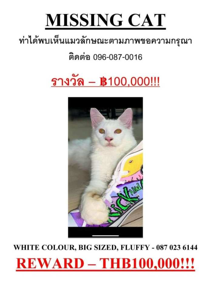 Russian in Pattaya offers 100,000 baht reward for missing cat | News by Thaiger