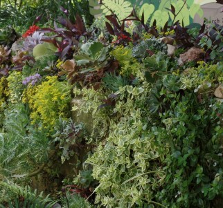 Succulent wall.