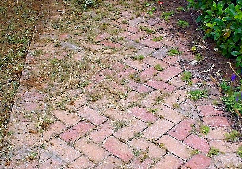 weeds in my pavers where do they