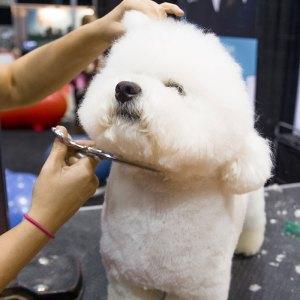 dog-grooming-winnipeg-4