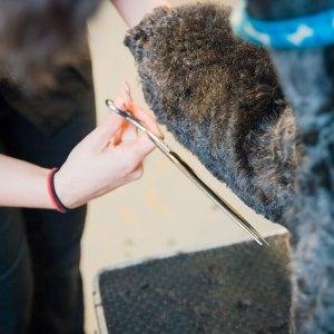 pawsh-dog-grooming-2