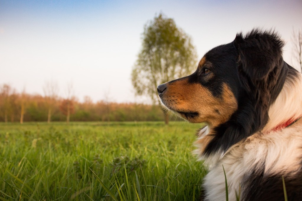 dog, concerns, rest