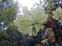 Dinosaur Leaves