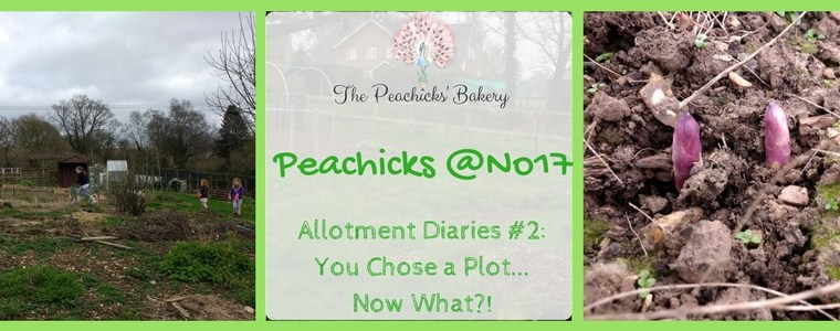 The Peachicks @No17 Allotment Diaries #2 – You Chose a Plot.. Now What?