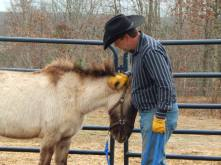 Roger and Comanche