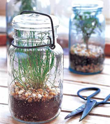 Plant an herb garden inside mason jars