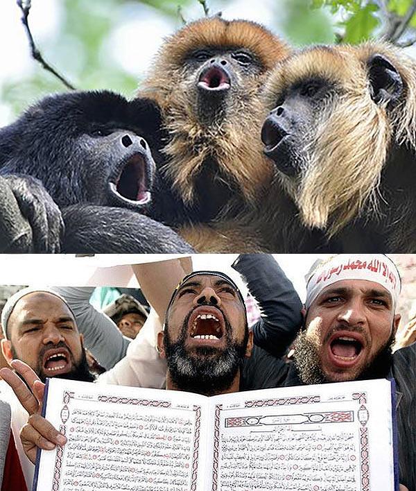 Islamic howling monkeys