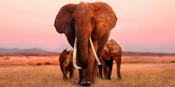 Elephant Queen (Apple TV+) Interview – Mark Deeble & Victoria Stone