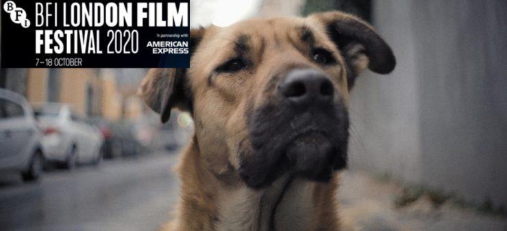 BFI London film Festival 2020 – Film Review – Stray (2020)