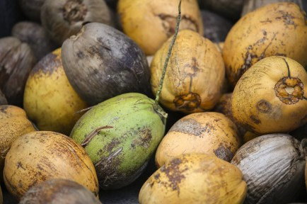 coconut-691565_1920