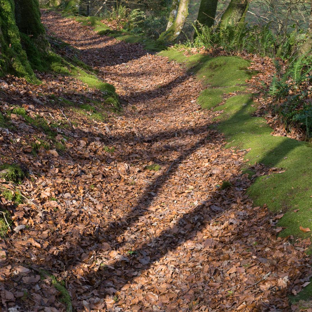 Erme Plym Trail near Spriddlestone, Devon.
