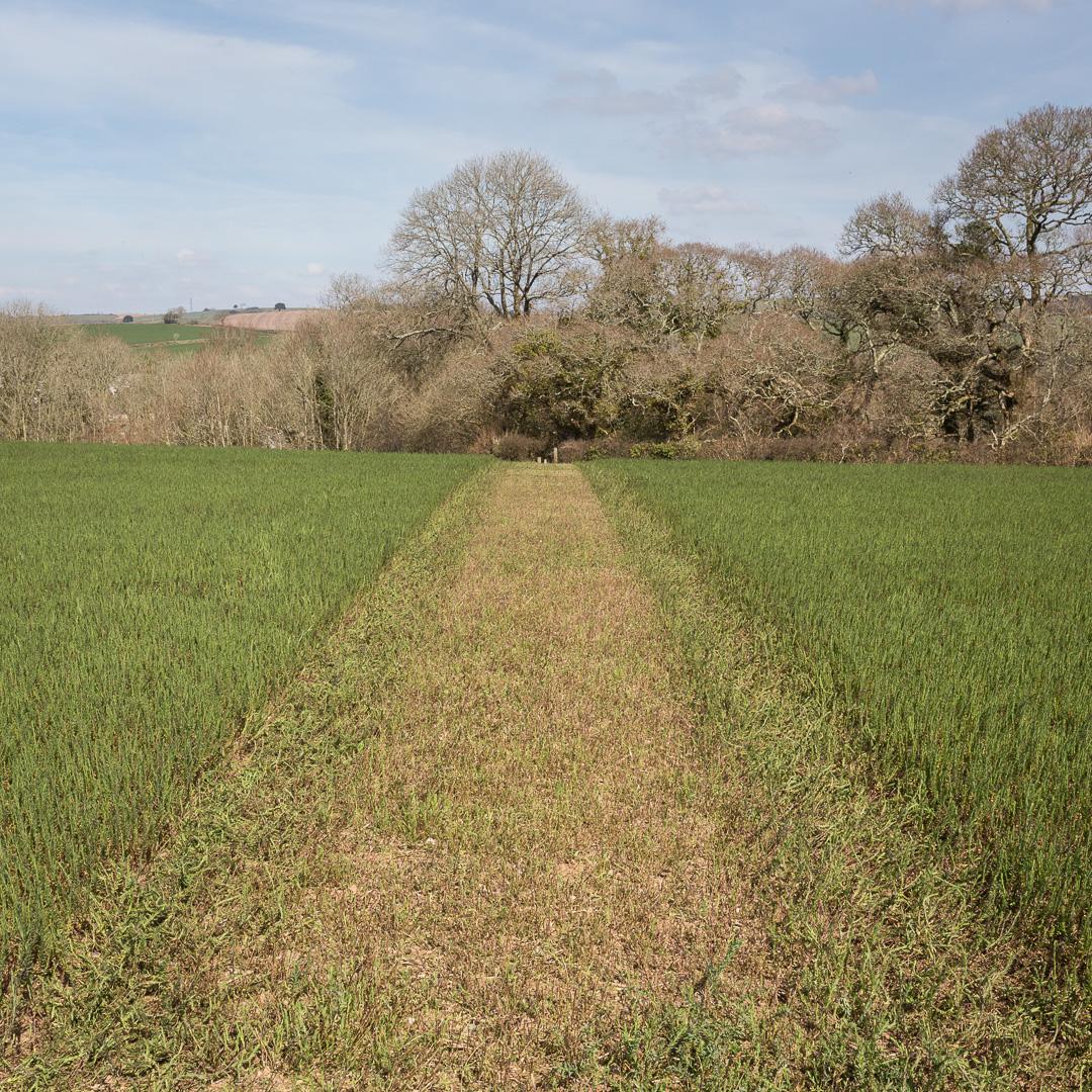 Path to Rock Park Wood, Cornwall.
