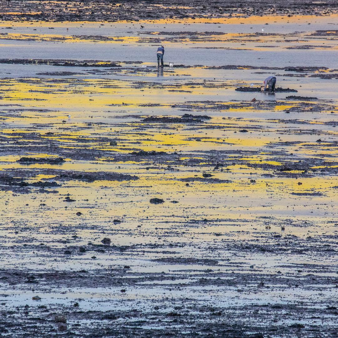 Digging for bait, Gann Beach, Pembrokeshire.