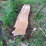 Simple Raised Bed Cardboard