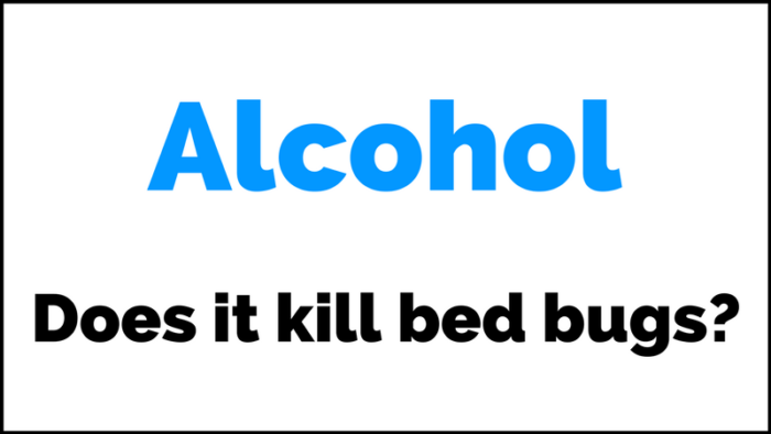 Can Rubbing Alcohol Kill Bed Bugs Does Rubbing Alcohol