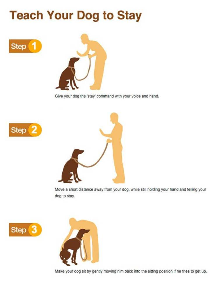Tips on How to Successfully Teach Dog Tricks