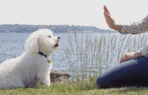 How To Teach A Dog To Stay