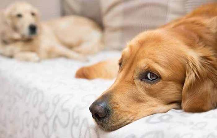 Is melatonin safe for dogs