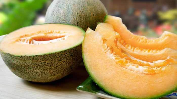 Can Dogs Eat Cantaloupe