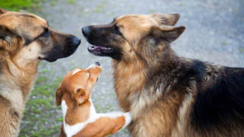 aggressive dog training tips