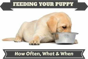 choose large breed puppy foods