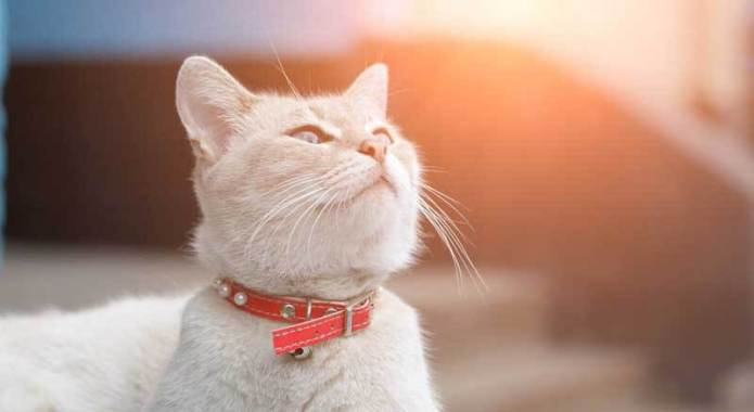 Seresto Cat Collar Reviews