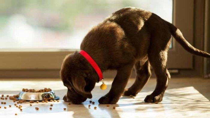 best large breed puppy food reviews