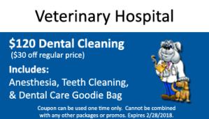 February Dental Special