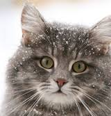 Keep Your Pets Warm This Winter