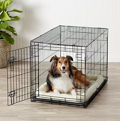 AmazonBasics Single Door Folding Metal Dog Crate Medium