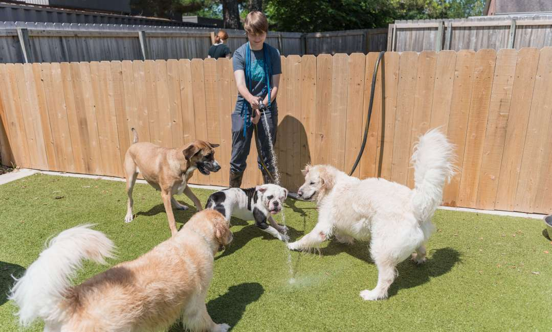 Dogs playing with hose at doggie daycare