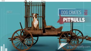 Image of the best dog crate for pitbulls