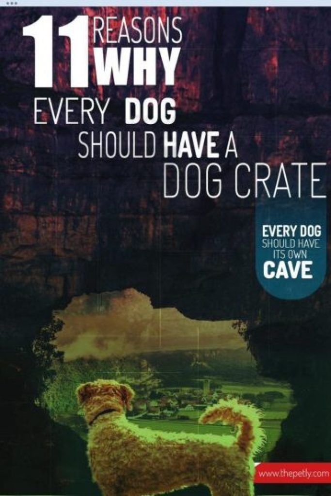 A 1000 by 1500 image of the article on Why Every Dog Should Have A Crate