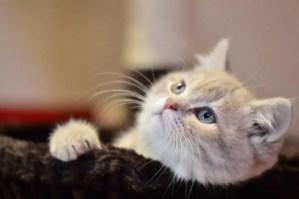 Best cat shock collars reviews