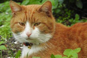 best limited ingredient cat food