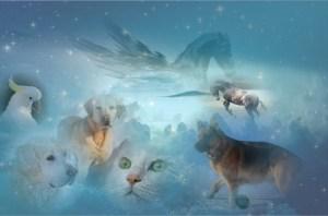 pets in heaven