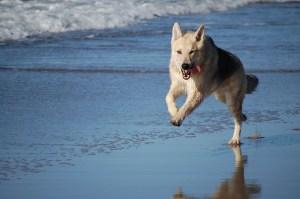 dog-on beach
