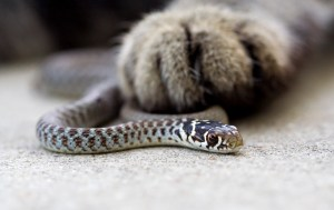 paw and snake