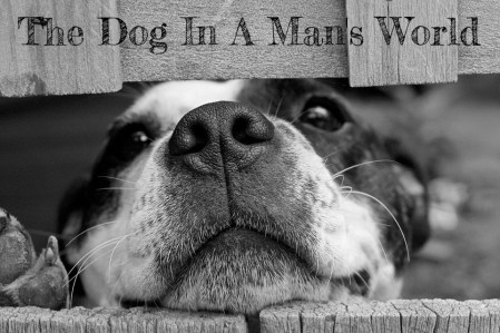 the dog in a man's world